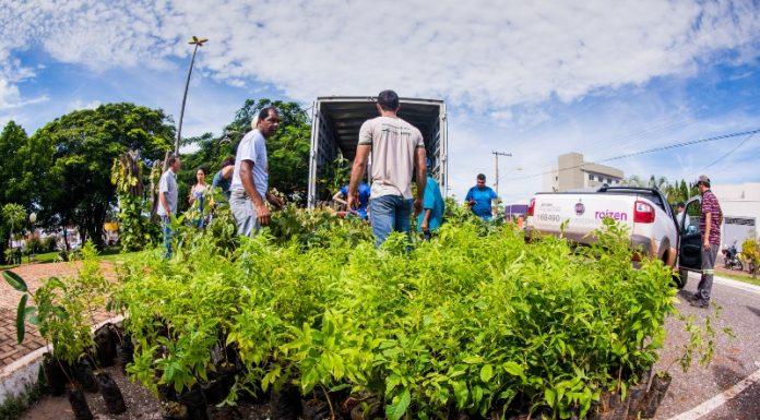 a97de49024 Prefeitura de Jataí distribuiu 6.000 mudas de árvores nativas do cerrado em  comemoração ao Dia Mundial da Água